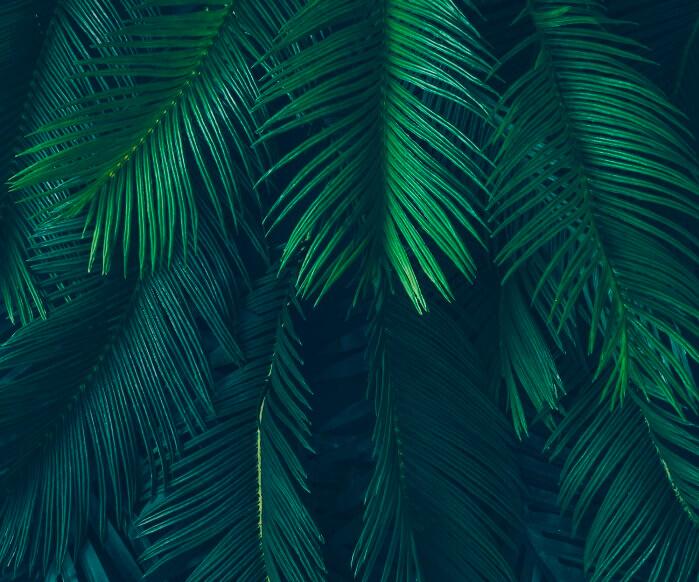 Copaca screens out in the jungle